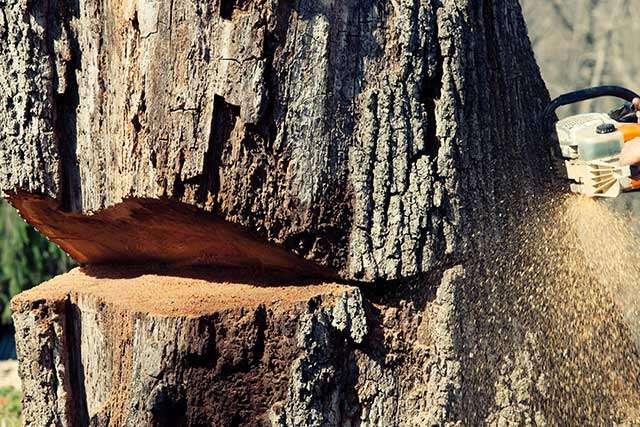 tree felling img