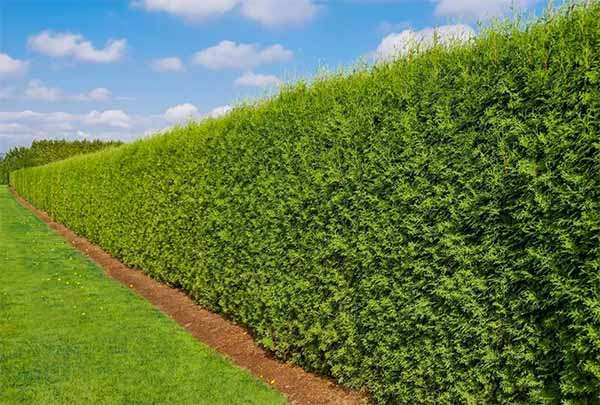 hedge contractor service