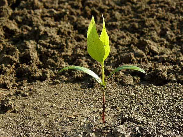 tree planting service kent