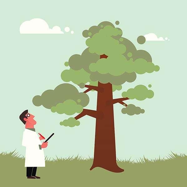 tree-survey-servce-kent