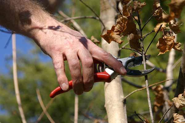 tree transplanting service kent