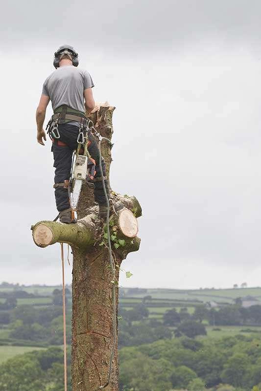 tree surgeon kent img